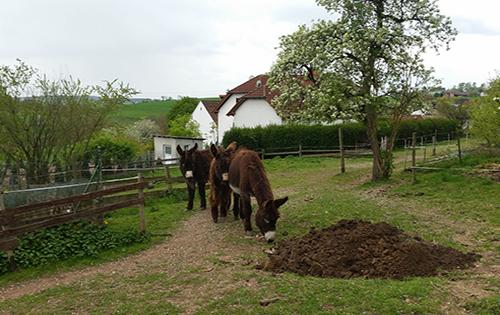 Esel und Erdhügel